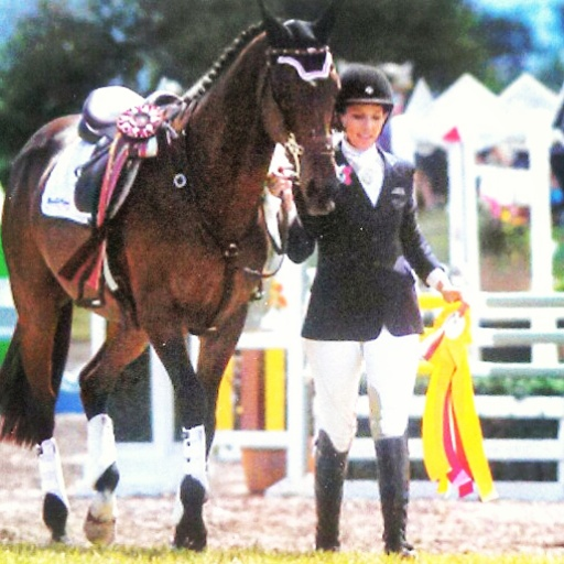 Kg Eventing Sport Horse Training For Fun Or Show